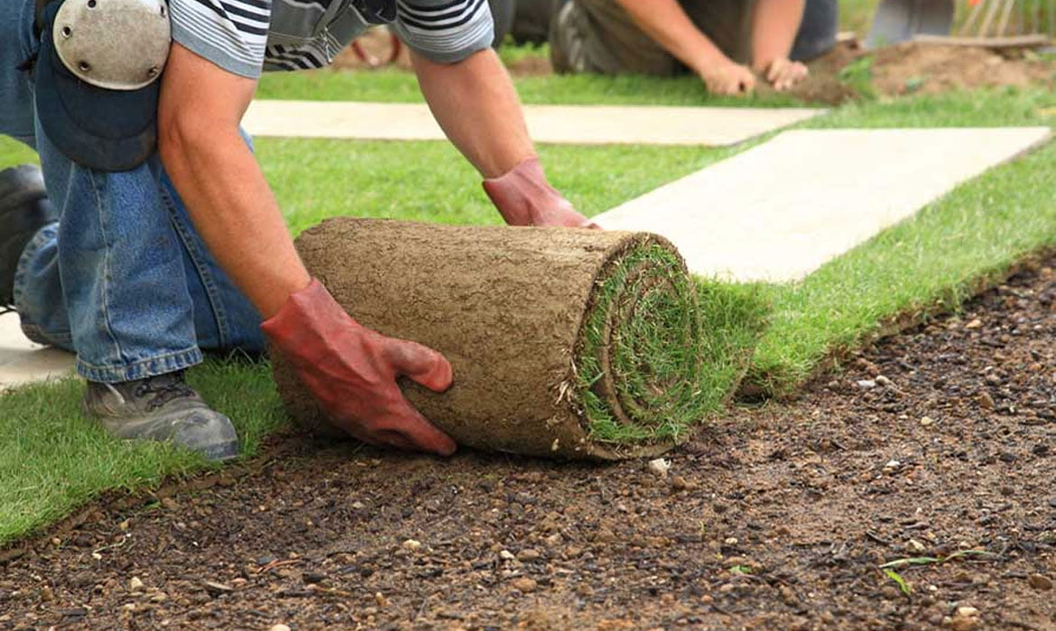 3 Landscaping Tips For Your Property