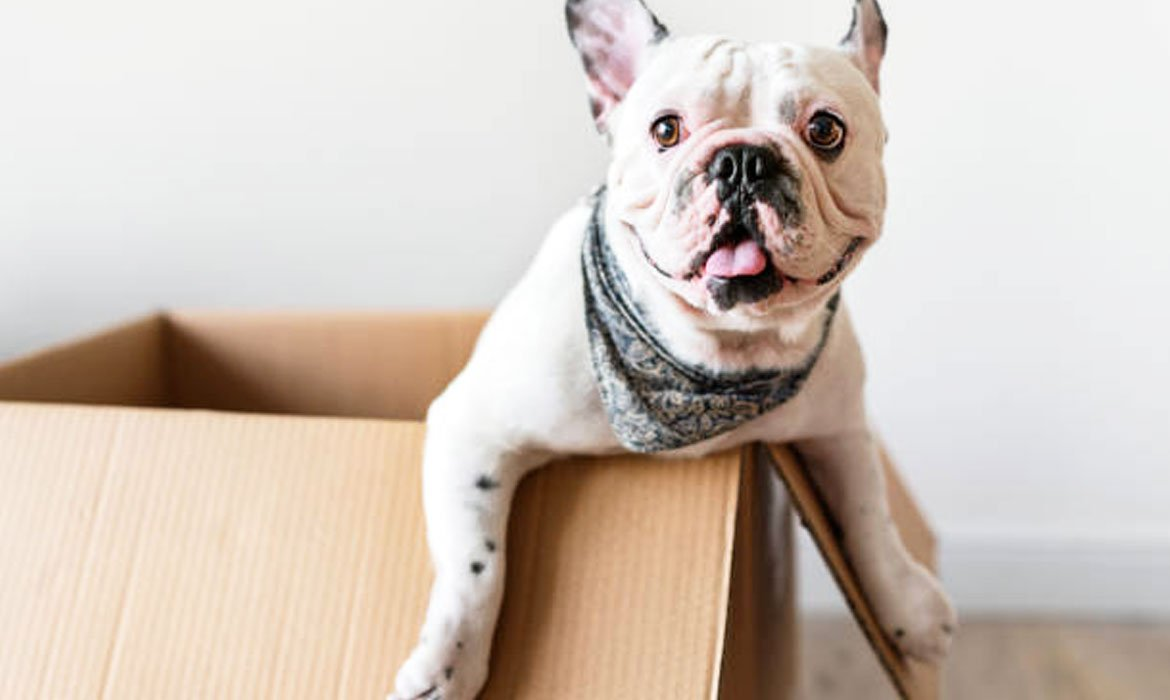 Moving can be stressful on everyone making the trip, even the pets!